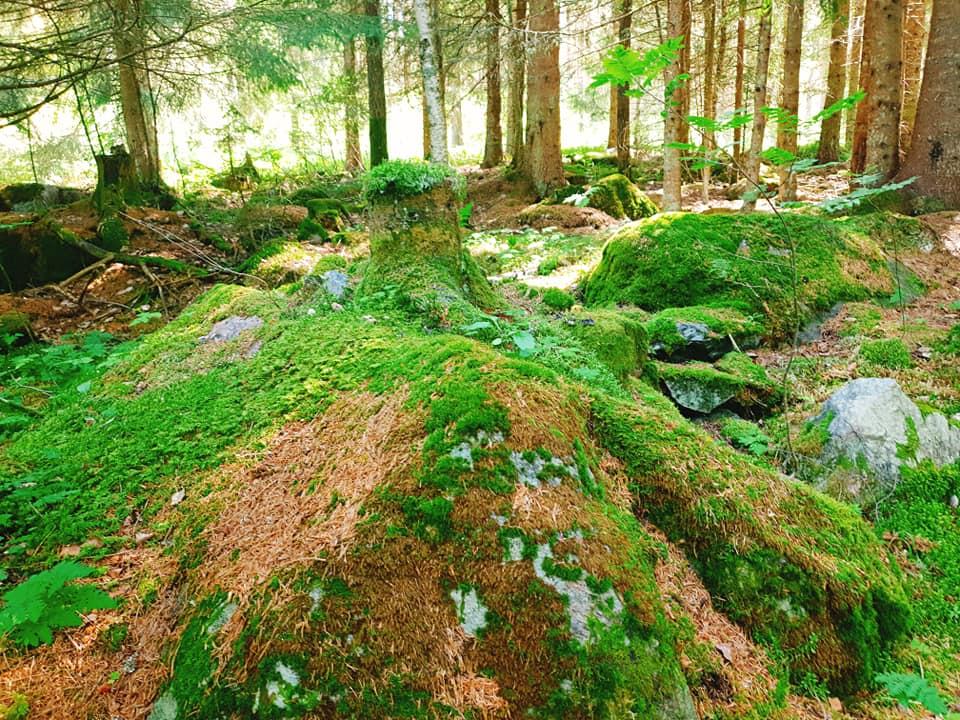 Skogen på jakt efter svamp
